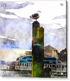 Sausolito Gull Acrylic Print