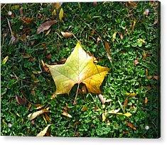 King Leaf Acrylic Print
