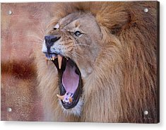 Acrylic Print featuring the photograph King Of Beasts by Dyle   Warren