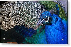 King Of Colors Acrylic Print