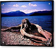 King Of The Driftwood Acrylic Print
