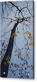King Of The Forest Acrylic Print by Janet Felts