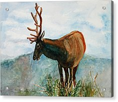 King Of The Hill Acrylic Print