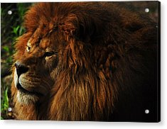 King Of The Jungle Acrylic Print by Valarie Davis
