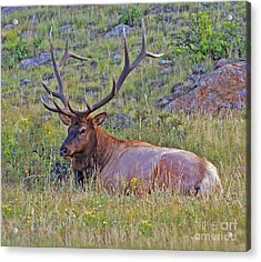 King Of The Meadow Acrylic Print