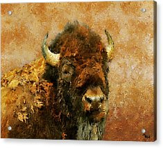 King Of The Plains Acrylic Print by Roger D Hale