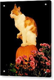 King Of The Pumpkin Acrylic Print