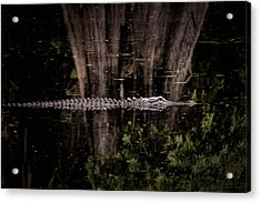 Acrylic Print featuring the photograph King Of The River by Steven Sparks