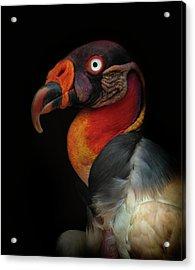 King Vulture-sarcoramphus Papa Acrylic Print