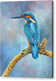 Kingfisher Acrylic Print by David Stribbling