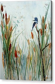 Kingfisher Dragonflies And Cattails Acrylic Print