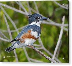 Kingfisher Acrylic Print