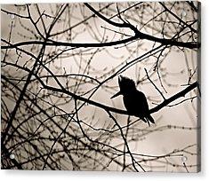 Kingfisher Silhouette Acrylic Print