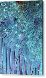 Kingfisher Wing Feathers Acrylic Print by John Devries/science Photo Library