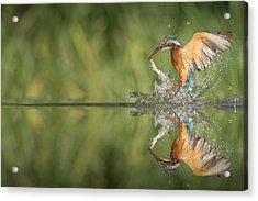 Kingfisher With Catch. Acrylic Print by Andy Astbury