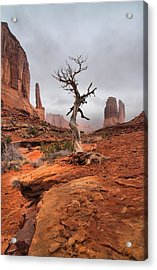 King's Tree Acrylic Print