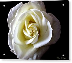 Acrylic Print featuring the photograph Kiss Of A Rose by Shana Rowe Jackson