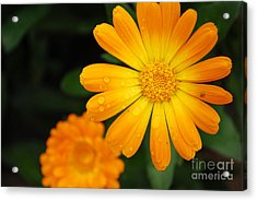 Kissed By Nature Acrylic Print by Susan Hernandez