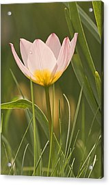 Kissed By The Morning Acrylic Print