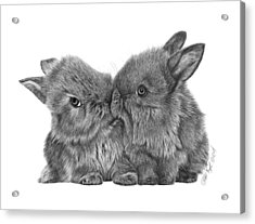 Kissing Bunnies - 035 Acrylic Print