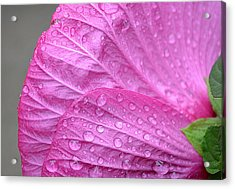 Kissing Pink Acrylic Print by Michelle Ayn Potter