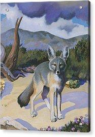 Kit Fox Acrylic Print