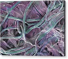 Kitchen Paper Towel, Sem Acrylic Print by Power And Syred