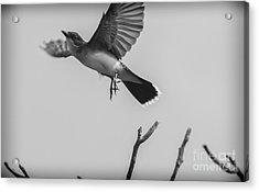 Kite... Acrylic Print