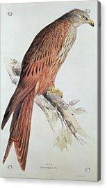 Kite Acrylic Print by Edward Lear