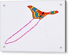 Kite With Pink Tail Acrylic Print by Michael Bruce