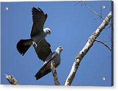 Kites In Love Acrylic Print