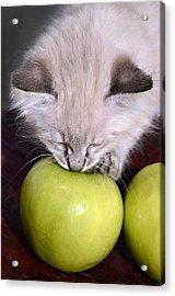 Kitten And An Apple Acrylic Print