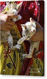 Kitten Acrylic Print by Bobby Mandal