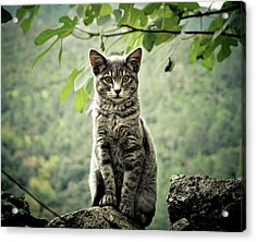 Kitten Acrylic Print by By Corsu Sur Flickr