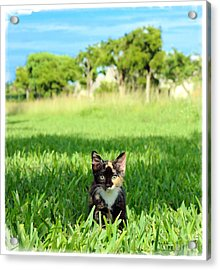 Acrylic Print featuring the photograph Kitten by Carsten Reisinger