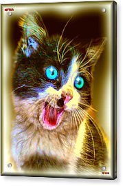 Acrylic Print featuring the painting Kitten by Daniel Janda