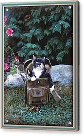 Kitten In A Canvas Bag Acrylic Print by Patricia Keller