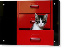 Kitten In A Red Drawer Acrylic Print