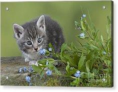Kitten In Flowers Acrylic Print by John Daniels