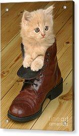 Kitten In Shoe Ck181 Acrylic Print by Greg Cuddiford