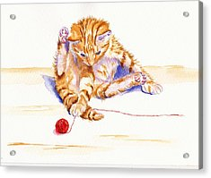Kitten Interrupted Acrylic Print