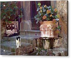Kitten Italiano Acrylic Print