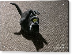 Kitten Playing With Ball Acrylic Print by James L. Amos