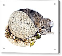 Acrylic Print featuring the photograph Kitten With An Easter Bonnet by Susan Leggett