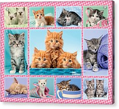 Kittens Gingham Multi-pic Acrylic Print by Greg Cuddiford