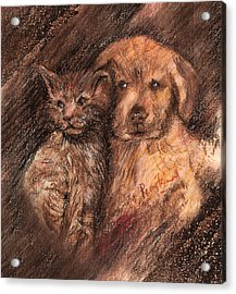 Kitten And Golden Retriever Pup Acrylic Print by Remy Francis