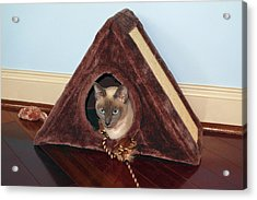 Kitty A-frame Acrylic Print by Sally Weigand