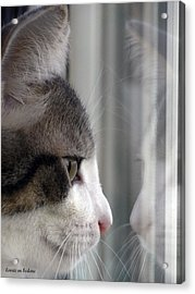 Kitty Cat Reflection Vert Acrylic Print by Lorrie Bedore