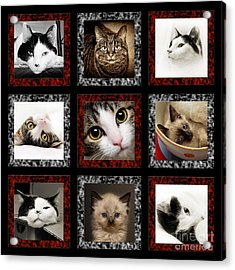 Kitty Cat Tic Tac Toe Acrylic Print