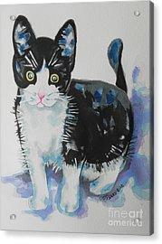 Kitty Acrylic Print by Chrisann Ellis